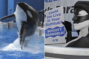 SeaWorld attempt at damage control devolves into feud with 'PETA trolls'